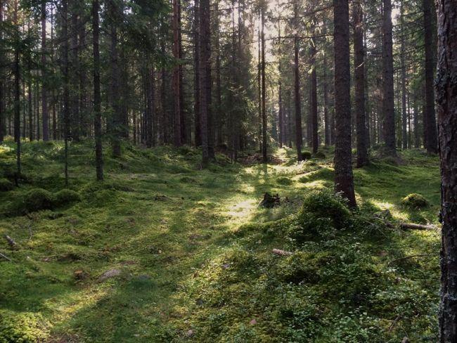 Malin Bohm en blogg om slöjd, odling och landsbygd www.malinbohm.se